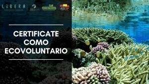 Certificate como ecovoluntario